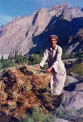 Buying grass in Gupis (Noorkhan) Tags: life pakistan mountains colour nature beauty khan areas northern nwfp mohammad noor gilgit chitral gupis karakoraam