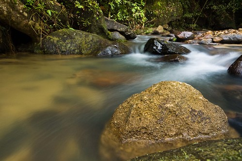 Water flowing over rocks in the green forest