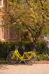 (Georgios Karamanis) Tags: street pink flowers windows holland tree green netherlands amsterdam bike bicycle yellow wall fence petals bush pavement bricks sidewalk karamanis