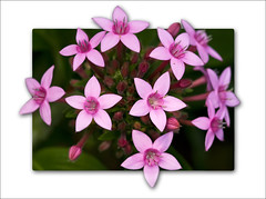 Flowers in 3D ('PixelPlacebo') Tags: flowers flower color macro photoshop 3d flora soft purple botanicgarden d300 105mm