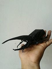 hercules beetle - satoshi kamiya (javier vivanco origami) Tags: hercules beetle satoshi kamiya javier vivanco origami ica peru