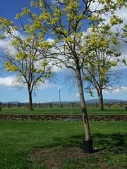 View From Ngatarawa (Tkuta) Tags: newzealand hawkesbay hawkesbaynz