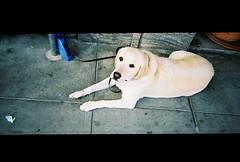 sweet, sweet dog