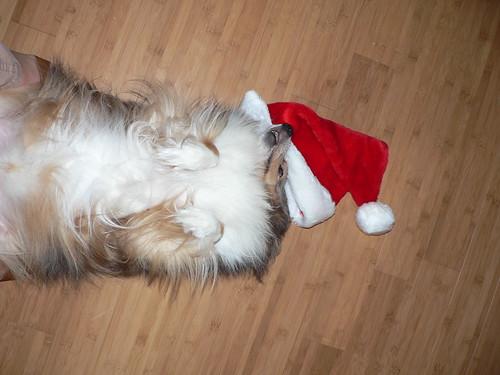 Dead Christmas Dog