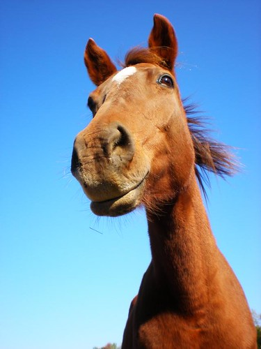 horse smile Royalty Free Stock