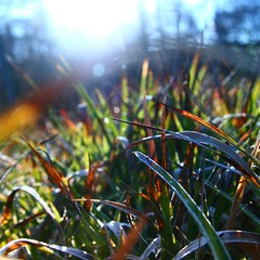 light of winter (limerickdoyle) Tags: ireland winter sun grass frost efs1785mm canon400d