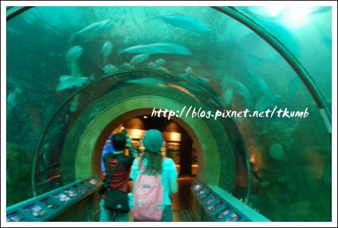 澎湖水族館 (8)