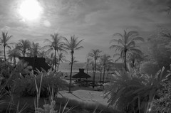 Early Morning (valgraphies) Tags: ocean tree beach pool ir mexico puerto palm infrared vallarta valgraphies