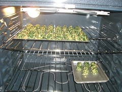 Spinach Balls in the oven