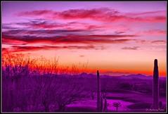 Sonoran Desert Winter (davidanthonyporter) Tags: christmas pink winter sunset arizona cactus clouds peace purple desert newyear scottsdale saguaro sonorandesert terravita colorphotoaward