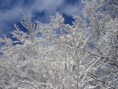 Winter Wonderland auf der Platte, Dezember 2007 (2)