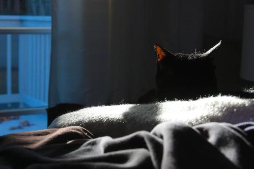fuzzy lighting