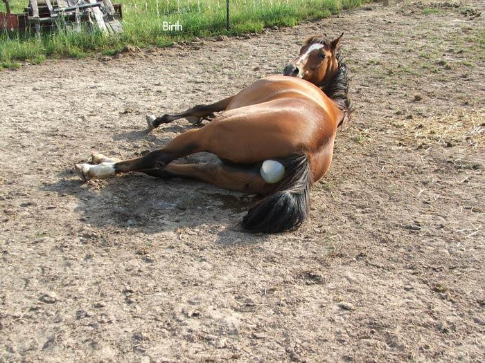 asi nacen los caballos