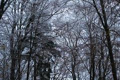 ryoku_de_5693 (ashesmonroe) Tags: wood november trees winter wild sky detail nature leaves forest germany deutschland ast herbst holz wald blätter bäume buchwald badenwürttemberg canonef50mmf18ii hohenlohe badenwrttemberg eckartshausen ilshofen landkreisschwäbischhall b¦ume landkreisschw¦bischhall bl¦tter