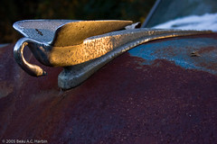 1953 Packard hood ornament (BACHarbin) Tags: usa cars abandoned car birds animals metal sunrise swan rust personal decay steel rusty photoblog chrome ornaments va rusted hood trucks rusting hoodornaments wrecks packard windshields waterfowls delapidated zioncrossroads submittedtophotoshelter