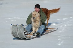 My favorite! (rjbowin) Tags: snow dogs mark sledding cody shamrock