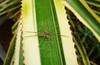 Aranha verde  - 02 (Rafinha Shinta1) Tags: verde planta praia café animal água mar do maria natureza flor bonito chuva paisagem céu vermelho fruta abelha dourado amarelo libelula peixe 02 inseto ave borboleta cachorro basset macaco quarto nublado prédio sapo oriental decoração lagarto narigudo filhote libélula mosca bolacha horizonte siri ondas coqueiro joaninha papagaio lata arara prata aranha canário grão taturana bugio carangueijo gafanhoto gaiola besouro bichinho pólem mariafedida tesourinha vira enguia fedida siriri