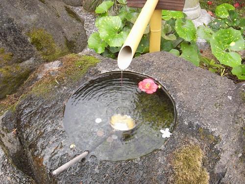 当麻寺(桜)-07