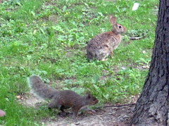 Rabbit & squirrel