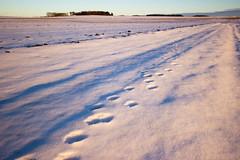 footprints in the snow (Jules Marco) Tags: footprints fusspuren schnee snow winter winterzeit wintry winterlandschaft dawn sonnenaufgang sunrise woodquarter waldviertel niederösterreich austria loweraustria österreich canon eos600d sigma1020mmf35exdchsm wideanglelens weitwinkel nature natur outdoor dof depthoffield tiefenschärfe schärfentiefe