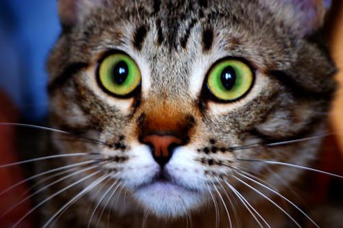 Los ojos de Proscri