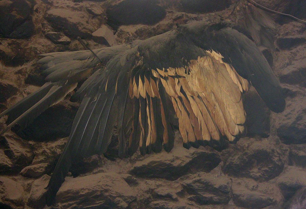 condor-wing_0331.jpg