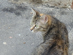 The cat (liliana_ch) Tags: cat chat stray kissablekat bestofcats kittyschoice catmoments