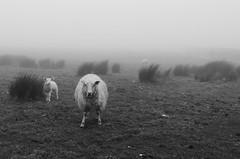 No Pasarn! (Alexandre Moreau | Photography) Tags: uk england lundy lundyisland isleoflundy