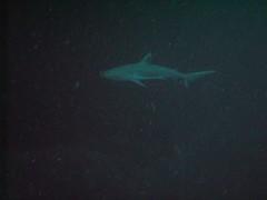 PICT0052 (JoseQ) Tags: blue mar hole great tiburones buceo caribe submarinismo tiburón