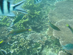 IMG_2427 (dcgreer) Tags: malaysia pulau redang pulauredang