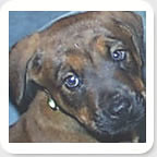 Green Girl (muslovedogs) Tags: dogs puppy mastweiler myladyoffspring lilboyoffspring