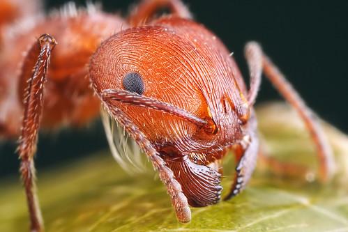 Даже в самых миролюбивых муравьиных семьях особи делятся