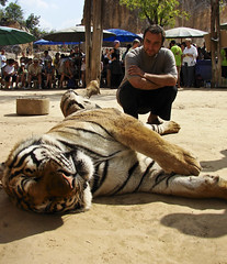Babak contemplating the tiger