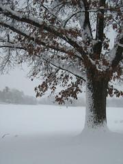 Marshmallow Snow (deu49097) Tags: winter snow tree oak ysplix