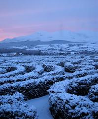 maze of snow