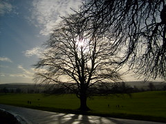 a view in ashton court (dandavie) Tags: road winter sky sun tree clouds ashtoncourt sunbehindtree