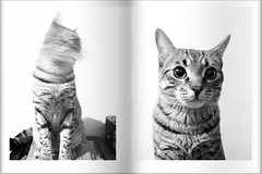 -NON TI MUOVERE !!- (*BLULU) Tags: cat micio gattino itisnotmoving licenzaattribuzionenoncommerciale