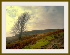 on holdron moss - lancashire - england (~ paddypix ~) Tags: autumn colour green nature clouds photoshop countryside decay picasa moodyblues ukandireland iusedpicasa