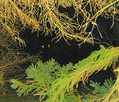 two lights in the dark (Sheila in Moonducks) Tags: trees night lights naturesfinest golddragon abigfave anawesomeshot superbmasterpiece diamondclassphotographer flickrdiamond coolestphotographers theperfectphotographer goldstaraward