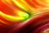 tulip leaf (schoebs) Tags: color colour canon sigma 150mm 40d schoebs