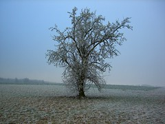 Lonely Tree, Hahn, Germany (Michael Joseph Goldst... etc) Tags: winter shadow favorite white cold tree field freezingfog germany interesting solitude alone solitary subtle hahn