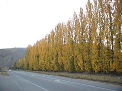 Gorgeous golden trees everywhere