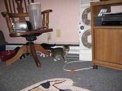11-24-07 507 (teribul_teri) Tags: cat play kittens cuties