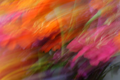 Experimental Blurrr (mark willocks) Tags: flowers arizona blur phoenix colorful thefarm cameramotion colourartaward upcoming:event=981998