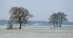 winter in Fluitenberg (HansHolt) Tags: winter landscape landschap snow sneeuw tree trees boom bomen farm boerderij fluitenberg drenthe netherlands canon 6d canoneos6d canonef24105mmf4lisusm