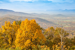 Golden - Shenandoah National Park (aparlette) Tags: autumn foliage tree nature nationalpark gold shenandoahnationalpark color yellow landscape mountain fall shenandoah frontroyal virginia unitedstates us