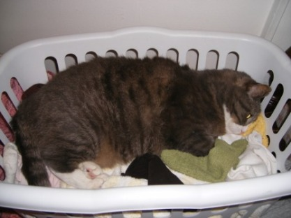LB in Laundry Basket