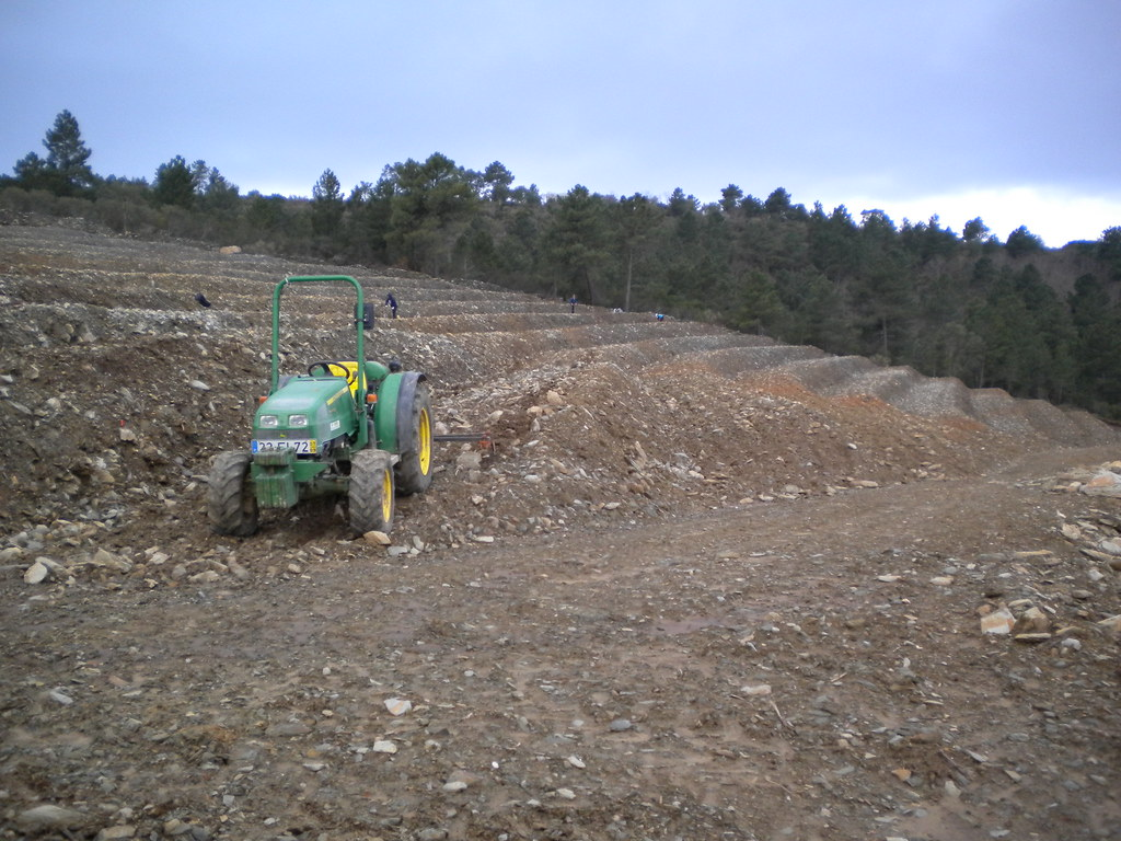 Planting white grapes in Quinta da Trovisca: Viosinho, Rabigato and Gouveio