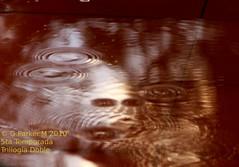 trilogia de reflejos parte 1, impactante, pues fue real (Mex::::::Gabriel:::Parker::::::Arg. 2016 images) Tags: naturaleza agua reflejos naturalshots despuesdelalluvia trilogias