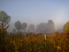 Haze over the horsefarm (Per Ola Wiberg ~ Powi) Tags: autumn trees fall reed nature beautiful ilovenature haze october sweden coolest hst trd 2007 fairplay dimma potofgold horsefarm naturesfinest vass blueribbonwinner finegold photohobby supershot eker hsthage favorites20 ekebyhov flickrgold anawesomeshot flickraward flickrbronzeaward freenature heartawards onlythebestare ultimategold treesinthemist eyejewels naturewatcher onlynatureaward flickrsheaven betterthangood bestofautumnandwinter2007 naturestyle fivegoldstars gnneniyisithebestofday naturesphotos zensationalworld addictedtonature naturesprime flickrsgottalent bestpeopleschoice buildyourrainbowtransparent buildyourrainbowred fireworksofphotos esenciadelanaturaleza chariotsofartists soulophotography
